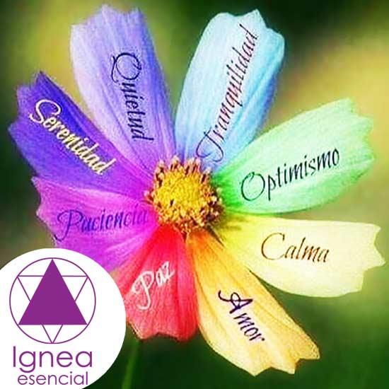 Ignea Esencial es Armonía para el Cuerpo y el Alma